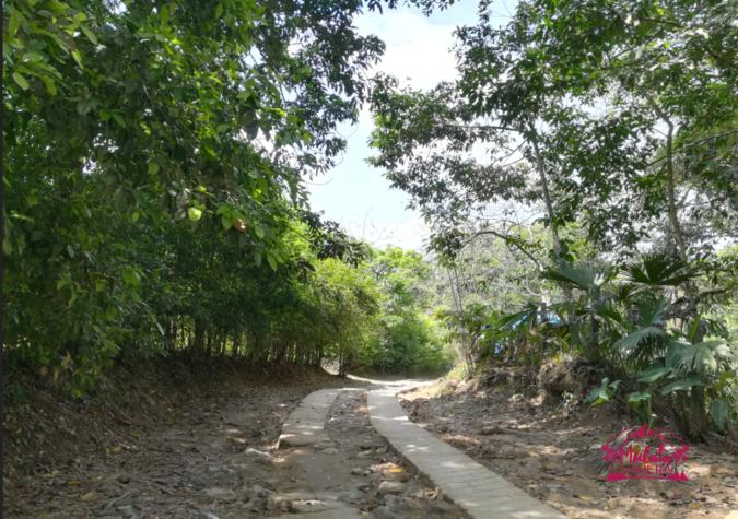 Camino de Minca.png